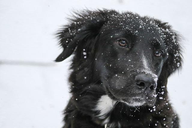Dog Friendly Snow